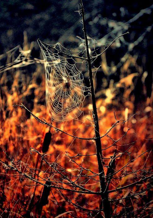 Una bienvenida al otoño