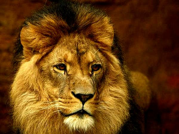 walter-james-palmer-minnesota-dentist-family-man-disgusting-bastard-and-killer-of-cecil-zimbabwes-most-famous-lion-theflyingtortoise Sobre la muerte de un león
